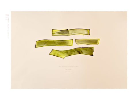 Laurence-Chellali-18